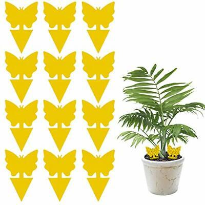 Dwcom 12 Pack Sticky Fruit Fly and Fungus Gnat Trap Yellow Sticky Bug Insect ...