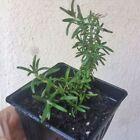 5 (-20 to -10 °F) Plants, Seeds & Bulbs