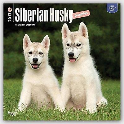 SIBERIAN HUSKY PUPPIES SQUARE 2017 UK WALL CALENDAR + FREE UK POSTAGE SALE !!