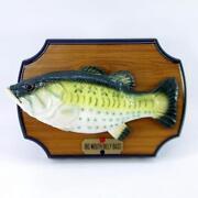 Singing Bass