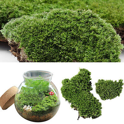 HOT Home Party Decor Artificial Green Grass Moss Plant Ornament Miniature - Decorative Grass