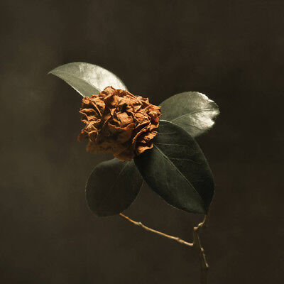St. Paul & The Broken Bones : Young Sick Camellia VINYL (2018) ***NEW***