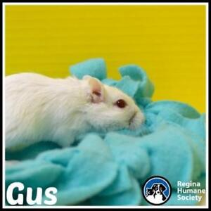 "Adult Female Small & Furry - Gerbil: ""Gus"""