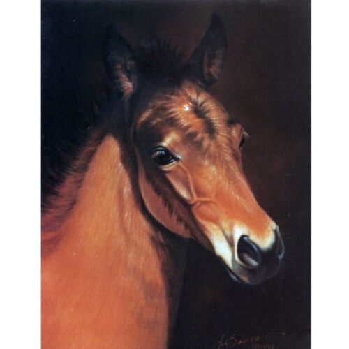 """Baby Face"" - Head of a Foal - 6 Pack of Blank Cards - Print by Jean Barrows"