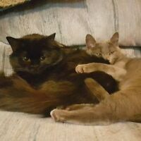 2 Cute Kittens Looking For 3 Weeks Sitter - Pet Sitter Wanted