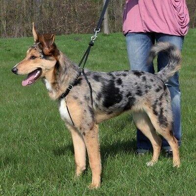 Trixie Easy Walk Dog Training Harness Large 1303