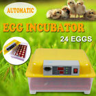 Incubator Other Pet Supplies