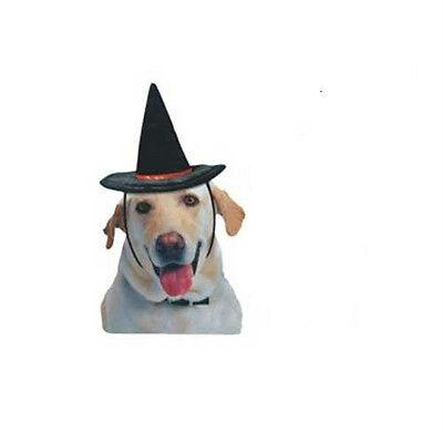 Halloween Felt Witch Hat for Dogs - Medium Size M Vo-Toys Medium Dog