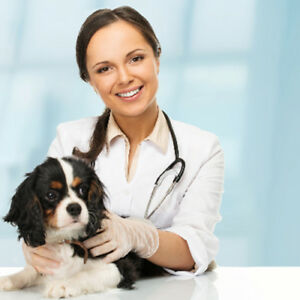 Toronto Mobile Vet Service – Delivering Pet Health at Your Doors