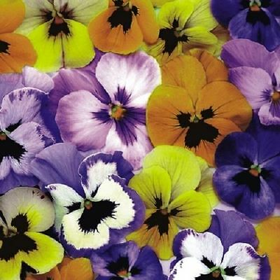 4 x Paper Napkins - Pansies - Ideal for Decoupage / Napkin Art