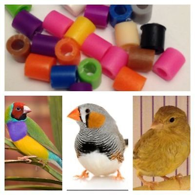 100 Bird Leg Bands Canary Leg Bands Finch Leg Bands High Quality 2.5mm New
