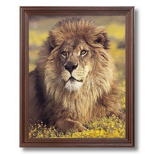 Framed Lion Picture Ebay