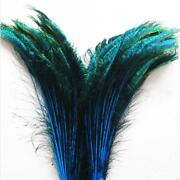 25 inch Peacock Feathers
