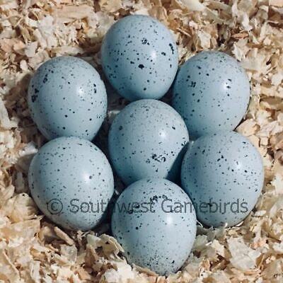 15 Celadon Blue-egger Coturnix Quail Hatching Eggs