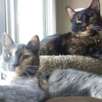 Looking for a Pet Sitter for two weeks May 2017