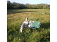 Devon (Cookbury) camping land/plot for swap/sell