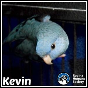 "Adult Male Bird - Parrot (Other): ""Kevin*"""