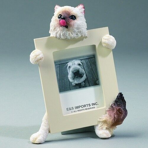 HIMALAYAN CAT ~ PICTURE FRAME  #1