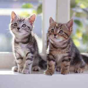 Looking to adopt 2 kittens Port Macquarie Port Macquarie City Preview