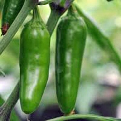 Heirloom  Early Jalapeno 100 Seeds Non-GMO USA + FREE Gift & COMB S/H