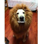 Dog Lion Costume