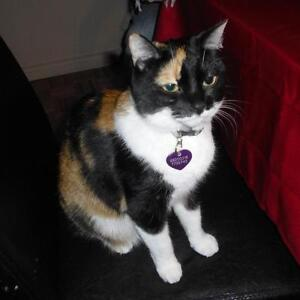 """Adult Female Cat - Domestic Short Hair-Calico: """"Marble"""""""