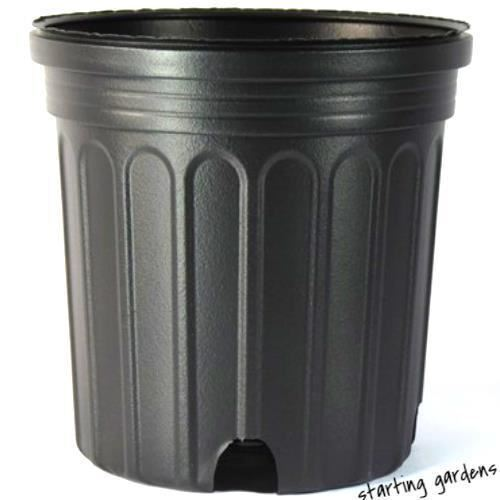 1 Gallon Nursery Pot (Qty. 100), Black Trade Gallon, 6.5 x 6.25 Inch
