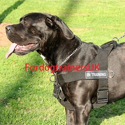 Cane Corso walking dog harness for sale, better control large dog
