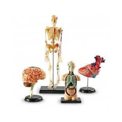 Human Body Anatomy Model Heart Brain Skeleton Organs 4d Science Lab Medical Set