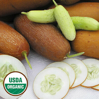 Certified Organic Vegetable Seeds (25+ certified USDA organic POONA KHEERA cucumber seeds )