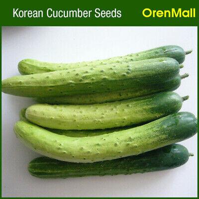 Korean Cucumber Seed (50 seeds), Cucumber Kimchi, Free Standard Shipping
