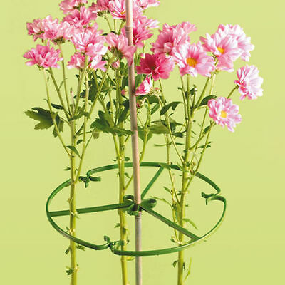 100 X 10 INCH ( 25 cm ) PLANT/ FLOWER SUPPORT RING FOR BAMBOO CANES