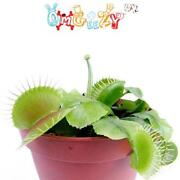 Carnivorous Plant Seeds