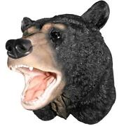 Bear Mount Taxidermy