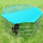 Guinea Pig Small Animal Supplies
