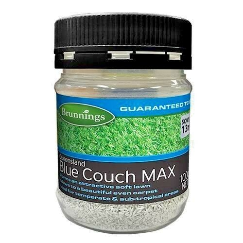 Queensland Blue Couch Max Lawn Seed 100g Brunnings Ebay