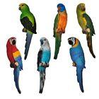 Skulpturen mit Papagei