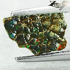 Ammolite Canada