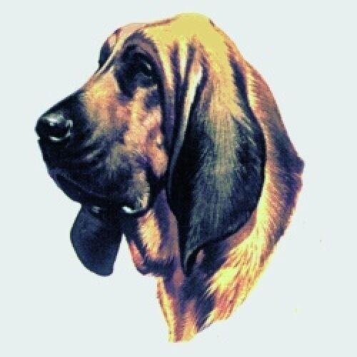 Embroidered Ladies Short-Sleeved T-Shirt - Bloodhound BT2634
