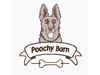 Dog Walking/Pet Sitting in the Bury/Bolton Area
