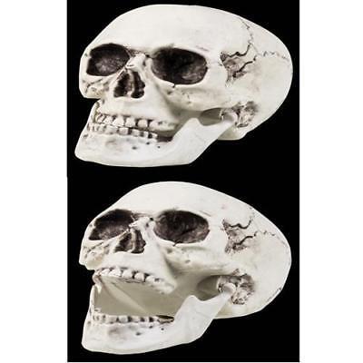 Totenschädel TOTENKOPF beweglicher Kiefer Halloween Skelett Deko Totenkopf 4362