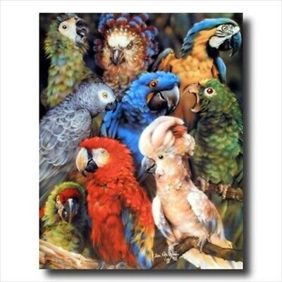 Tropical Parrot Bird Collage Wall Picture Art Print ()