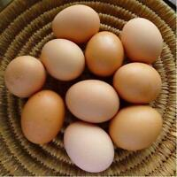 Organic Fresh Farm Eggs