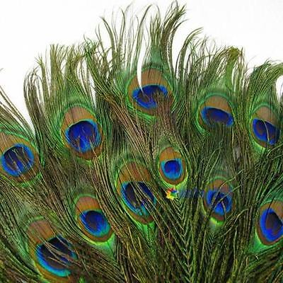 20pcs Real Natural Peacock Tail Eyes Feathers 8-12 Inches / about 23-30cm US