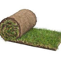 CASH Sod Job - Looking for someone to Lay Sod. SMALL YARD
