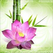 Glasbild Bambus
