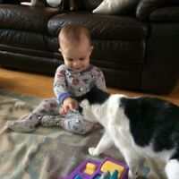Babysitting Wanted - Part Time Mother's Helper/Nanny Needed For