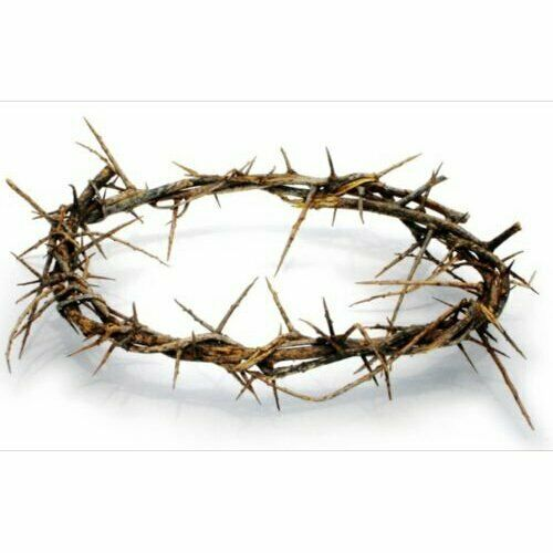 """4-6"""" Authentic Christian Jesus Crown Of Thorns From The Holy Land of Bethlehem"""