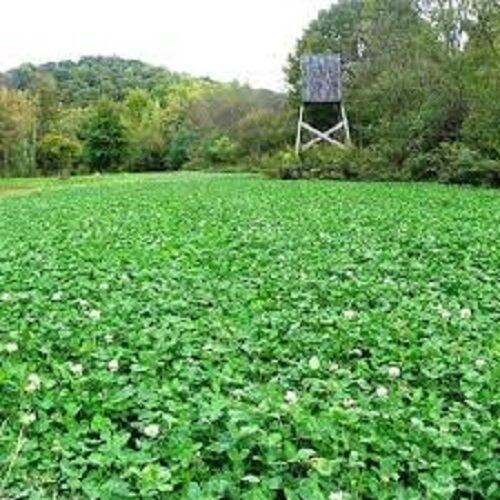 3# DEER GREENS & CLOVER Food Plot Seed Mix W/ Clovers Chicory Radish Rape Turnip
