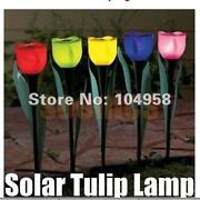 Tulip Solar Lights